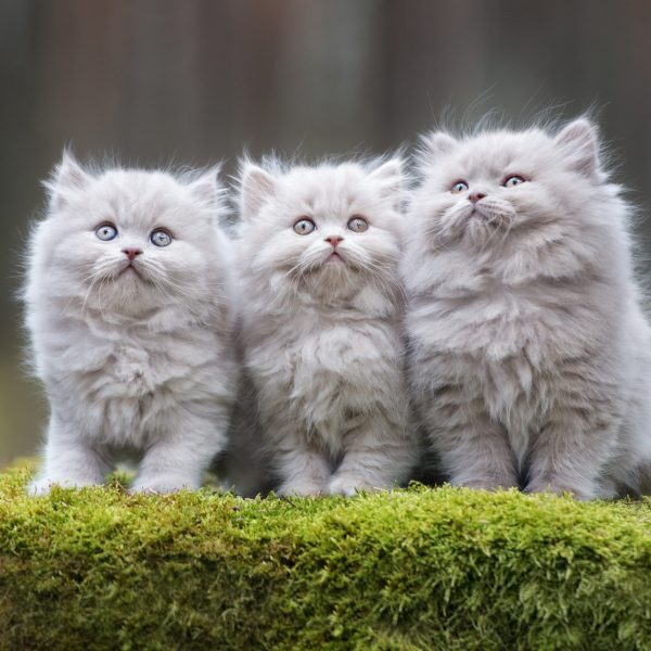 three adorable kittens sitting together