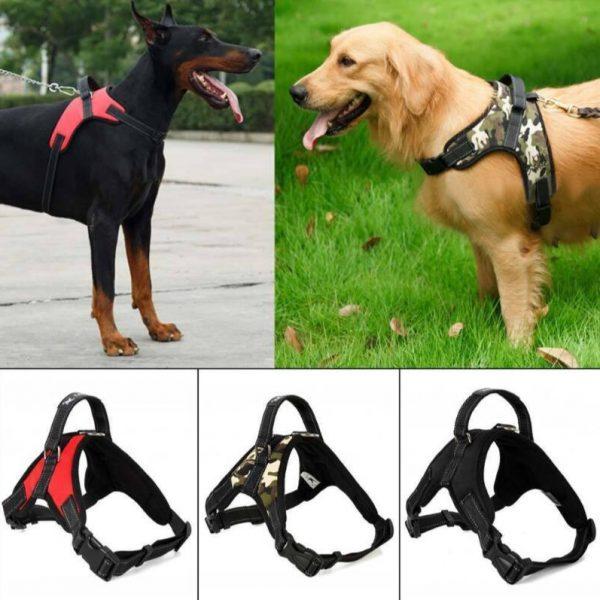 dog belt and collar