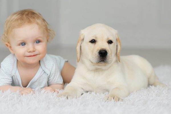 dogs-and-babies-header